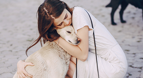 Monetary Donations - Animal Rescue Resource Foundation